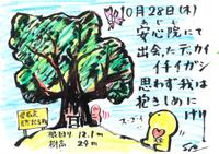 Mx4500fn_20101109_221412_002